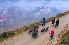 Sapa Off the Beaten Track Trekking