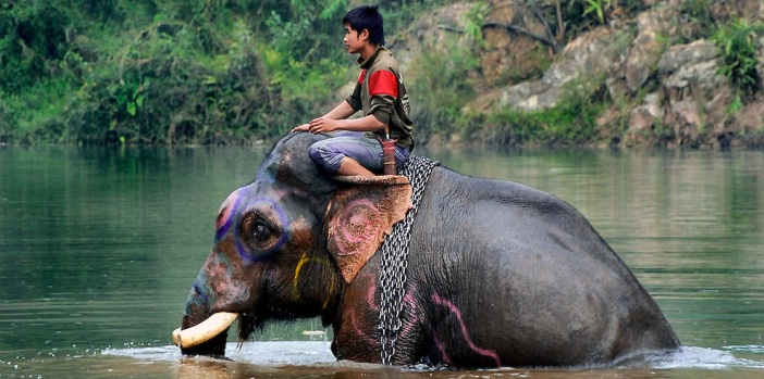 elephant-bath-at-pak-lai