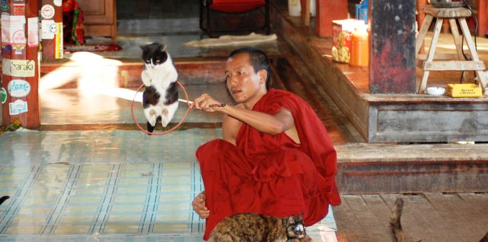 moench-am-inle-lake-mit-seinen-jumping-cats-myanmar