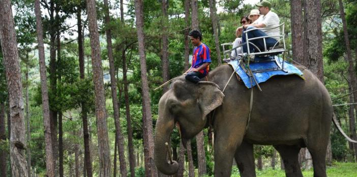 elephant-riding-dalat