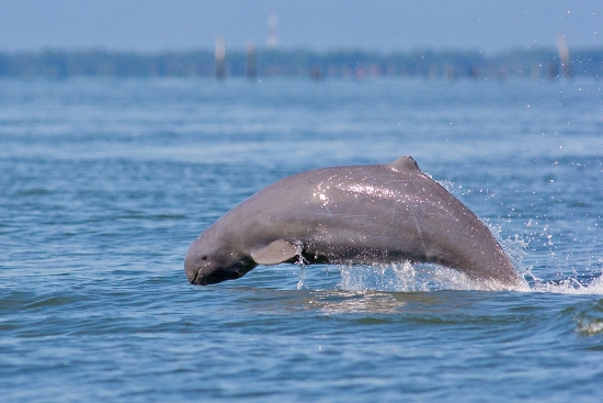 why-visit-cambodia-irrawady-dolphins