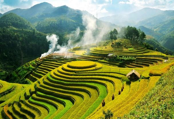 things-to-do-in-sapa-rice-terrace-field